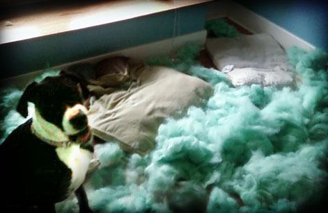 Dog Beds Destroyed