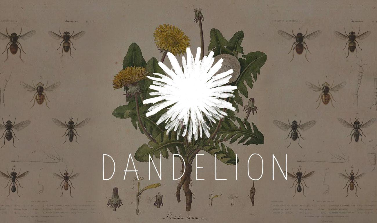 dandelion-social